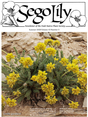 Sego Lily 2020 Summer Issue