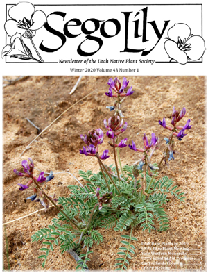 Sego Lily 2020 Winter Issue