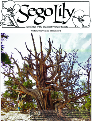 Sego Lily 2021 Winter Issue