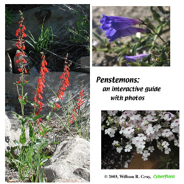 Penstemon CD label