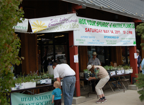 Spurge exchange and plant sale 2011