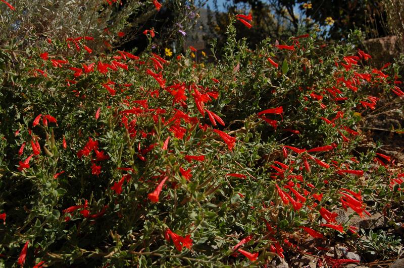 Utah native plant society home page mightylinksfo