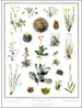 Threatend and Endangered plants poster
